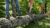 Hikers walking on fallen tree log in the forest - teenagers and woman backpackers hiking in the woods, static camera