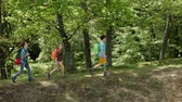 Hikers enjoy walking in forest - moving in and out of frame
