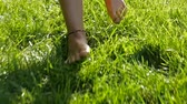 Walking barefoot in the grass - backlight on bare feet walk on green meadow, closeup Wideo
