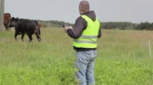 male animal : Farmer working with tablet PC near cows