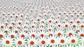 blossom : Abstract white flowers in rows