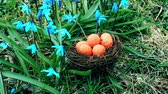 vysedět : Easter eggs in orange color in nest near flowers Dostupné videozáznamy