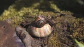 caracol : Two snails on stone