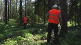 lumber industry : Forest keeper speak to the walkie talkie and mark the trees