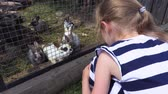 króliczek : Girl near rabbits at outdoor