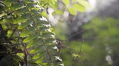 plante : Close up of ferns in rural area