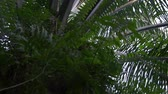 palmeras : Ferns growing around a palm oil tree