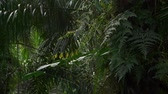 palma : Ferns on a palm oil tree