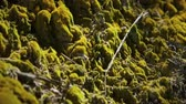 лес : Close up of moss growth
