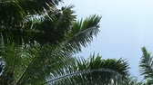 aves : Palm oil leaves against the sky