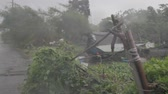 Strong typhoon wind blowing trees around on a farm
