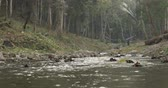 dao : Calm River Flowing Through Forest - Thailand - Flat Ungraded