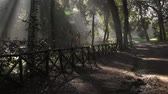 j��zda na kole : Villa Savoia city park in Rome in the early morning sun and fog. Pan and zoom in shot