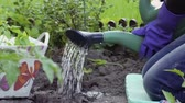 annaffiatoio : Watering beds with watering cans. Man in blue rubber gloves holds a green watering can. Man watered the garden from the watering can. Garden work. Working in the garden. Close-up.