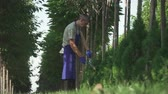 aparando : Gardener in blue uniform is cutting bushes in big garden. Tall man does his job carefully. Male is working with big scissors. Shooting from the bottom