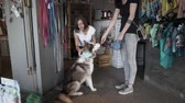 fancier : Young girl picking up clothes for her husky. Female came shopping to the pet store with husky. Seller helps to choose accessories for dog. Slow motion.