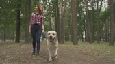 запустить : Young woman walks after the dog in forest. Lady is spending time with her labrador, she is happy and smiling. Outdoor rest with favourite pet. Dog is coming to camera