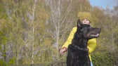 Close-up of black doberman looking up at his little owners hand. Cute Caucasian girl in yellow coat and mustard hat training her dog. Faithful pet with his owner in the autumn park