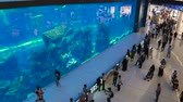 DUBAI, UAE - DECEMBER 12, 2018: People watching fish at the oceanarium inside Dubai Mall. The Dubai Mall is the worlds largest shopping mall.