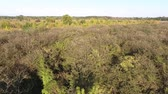organic : View from above orchard and trees. Drone aerial view from Poland
