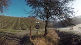 vinhedos : Beautiful morning at the German Vineyards