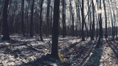 bizarre landscape : Eerie and mystic German winter forest