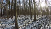 Hiking through the German forest in winter Stock Footage