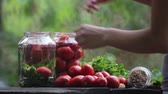 nutritious : Preparing for the salted tomatoes. Composition of tomatoes. Hand puts the tomatoes in a jar. Stock Footage