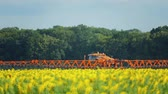 pesticide : The tractor sprinkles field with a sunflower. The sprayer processes the pesticide plantation helianthus plantation, close up. Stock Footage