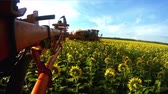 sows : View from the camera on the rod sprayer blooming sunflower. Videography of the operating sprayer in the field of sunflower time laps. Stock Footage