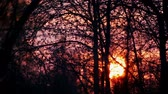 vibrante : Sunset in the trees and branches. The sun goes down in the trees and bushes.