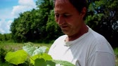 reforestation : A man holds in his hands paulownia seedlings. A farmer is considering a paulownia sapling on a plantation. Stock Footage