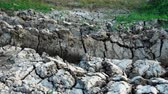 раскол : Cracked, dried surface of the earth. Cracks in the dried dry ground. Стоковые видеозаписи