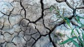 ひび : Cracked, dried surface of the earth. Cracks in the dried dry ground. 動画素材