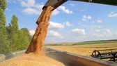 unloading : Combine harvester unloads grain in the box. Unloading wheat seeds