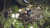 A moor hen on its nest surrounded by plastic waste on a river
