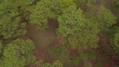 latão : Aerial view of forest. Da lat, Vietnam Stock Footage