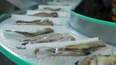 przetwory : Fish factory Seafood Production