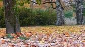 Colorful Autumn maple leaves falling on ground Wideo