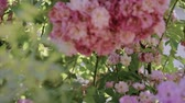 florescence : Flowering bushes in the rose garden, Botanical garden near greenhouse