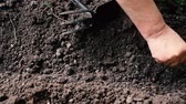Farmer throws seeds into the ground in his garden. Spring work, close-up. Stok Video
