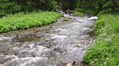 refrescar : Mountain stream in the forest. Close up, clear, drinking water