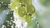 table grapes : Washing a bunch of fresh healthy green grapes with a close up view of a hanging bunch with fresh clean water cascading down amidst flying water droplets, with copyspace Stock Footage