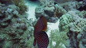 polyps : Vermilion Hind on a coral reef in the Red Sea