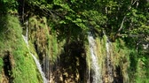 conservado : Detailed view of the beautiful waterfalls in Plitvice National Park, Croatia. HD Vídeos