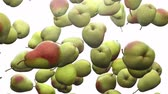 Super slow motion: falling pear against white background. High quality 4K seamless loopable CG animation. 3D rendering