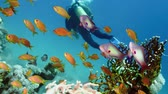 Colorful Fish on Vibrant Coral Reef and diver. Red sea. Egypt 4K