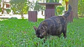 Cat playing in garden. Stock Footage