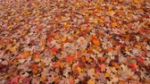 осень : Autumn leaves on the ground - pan