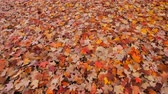 осень : Autumn leaves on the ground